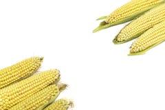 Świeże kukurudze odizolowywać na białym tle z kopii przestrzenią Obrazy Stock