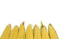 Świeże kukurudze odizolowywać na białym tle z kopii przestrzenią Obraz Royalty Free