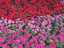 świeże kwiaty Fotografia Royalty Free