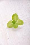 świeże liść miętowy Dobry z herbatą Obrazy Stock