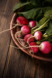 Świeże małe czerwone rzodkwie Fotografia Stock