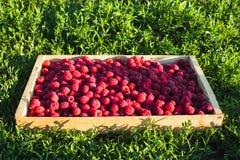 Świeże malinki w drewnianym pudełku na tle zielona trawa Dojrzałe jagody w drewnianym pudełku zdjęcie stock