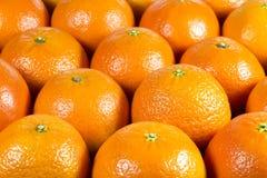 Świeże mandarynek pomarańcze Fotografia Stock