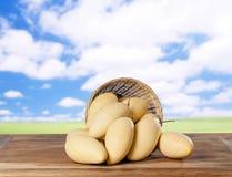świeże mango Fotografia Royalty Free