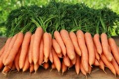 Świeże marchewki Obrazy Stock