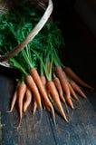 Świeże marchewki Obrazy Royalty Free