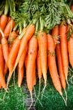 Świeże marchewki Obraz Stock