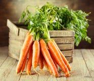 Świeże marchewki fotografia stock