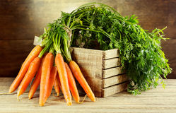 Świeże marchewki zdjęcia stock