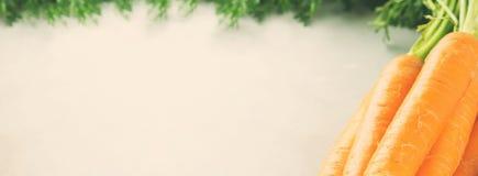 Świeże marchewki na szarym tle Stonowany sztandar Obraz Stock