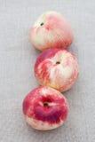 świeże nektaryny trzy obrazy stock
