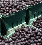 Świeże organicznie czarne jagody w papierowych koszach na kraju gospodarstwie rolnym wprowadzać na rynek Zdjęcia Royalty Free