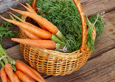 Świeże organicznie marchewki w koszu Zdjęcie Royalty Free