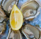 Świeże ostrygi i cytryna Zdjęcie Royalty Free