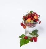 świeże owoce asortowana Fotografia Stock