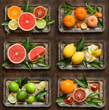 świeże owoce cytrusowe Obraz Royalty Free