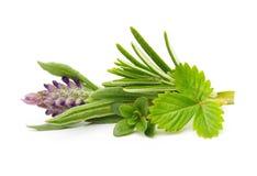 Świeże pikantność i ziele odizolowywający obrazy stock
