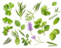Świeże pikantność i ziele odizolowywający fotografia stock