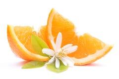 Świeże pomarańcze Zdjęcie Stock