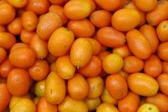 Świeże pomarańczowe cumquat cytrusa owoc Obraz Royalty Free