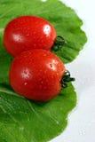świeże pomidory sałatę czerwieni Zdjęcie Stock