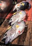 Świeże ryba na rynku w Tokio Fotografia Royalty Free