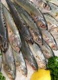 Świeże ryba w rybim rynku dla sprzedaży na lodzie Fotografia Stock