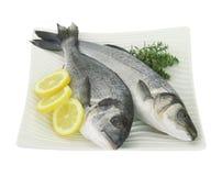 Świeże ryba Obrazy Royalty Free