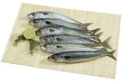świeże ryby zdjęcie stock