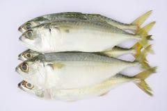 świeże ryby Zdjęcia Stock