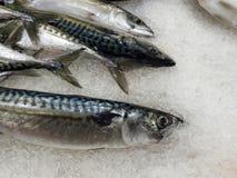świeże ryby Obraz Royalty Free