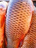 świeże ryby butów gabloty wystawowej ulicznego handlu ciepła zima obrazy royalty free