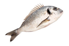 świeże ryby dorado Obrazy Royalty Free