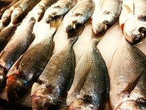 świeże ryby lodu Zdjęcie Stock