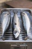 świeże ryby makrela Obraz Royalty Free