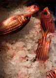 świeże ryby rynku Zdjęcia Royalty Free