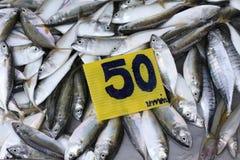 świeże ryby rynku Fotografia Royalty Free