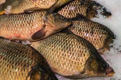 świeże ryby stark Zdjęcie Royalty Free