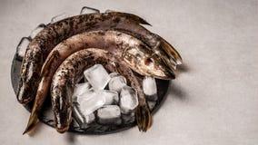 Świeże ryby z sześcianami lód na talerzu odizolowywającym na szarym tle Odg?rny widok, przestrze? dla teksta zdjęcia royalty free