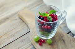 Świeże soczyste jagody agrestowy, czarny i czerwony rodzynek w przejrzystym szklanym kubku, Fotografia Royalty Free