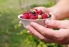 Świeże soczyste jagody, malinki, rodzynki, czernicy, agrest w białym talerzu w mężczyzna rękach Zdjęcie Stock