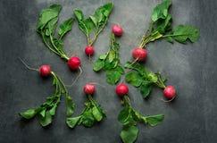 Świeże Surowe Dojrzałe Czerwone rzodkwie z Zielonymi liśćmi Rozpraszającymi na zmroku betonu kamienia tle Odgórnego widoku mieszk Obraz Stock