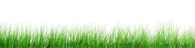 świeże trawa rząd Fotografia Royalty Free
