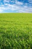 świeże trawa zieleni Zdjęcia Stock