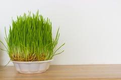 świeże trawa zieleni Zdjęcie Royalty Free