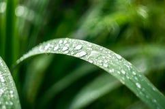 świeże trawa zieleni Fotografia Stock