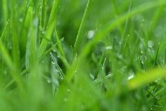 świeże trawy. obrazy stock