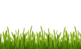 świeże trawy. Obraz Stock