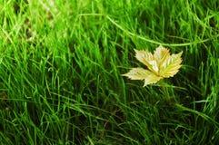 świeże trawy. Zdjęcia Stock