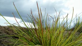 świeże trawy Zdjęcie Stock
